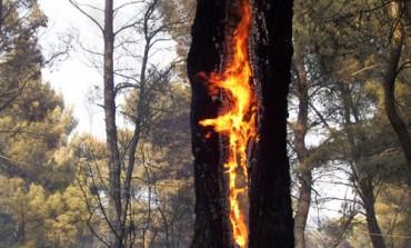 Casola: sedati piccoli incendi